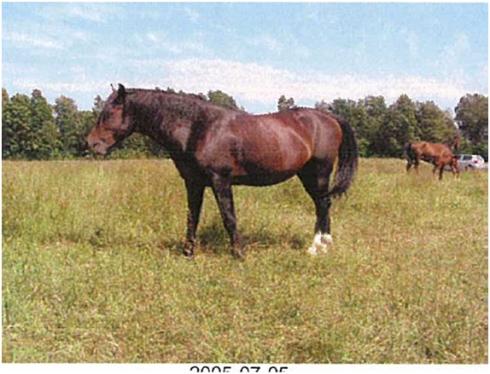 poppius hästar