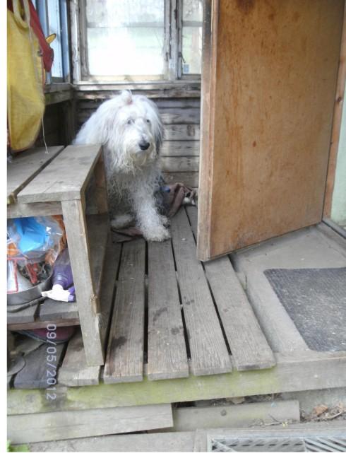 trixie på verandan